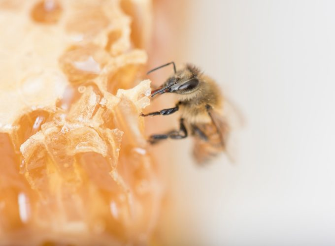 Beyond Tea and Toast: 5 Surprising Ways to Make Honey an Effective Part of Everyday Life