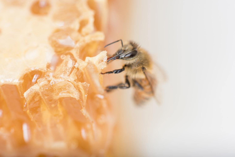AC_Beekeepers-2_10-19_1500x1000