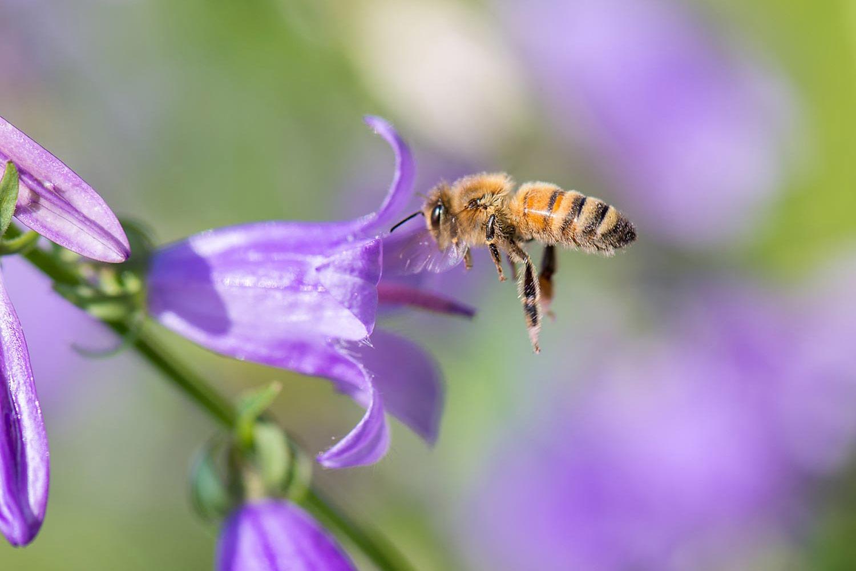 AC_Beekeepers-7_10-19_1500x1000.jpg
