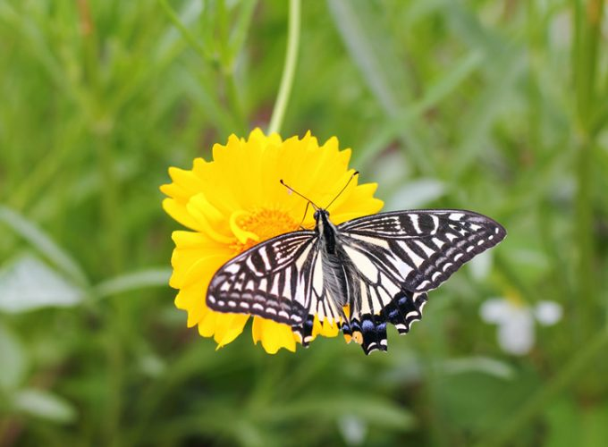 5 Pollinator-Friendly Flowers to Brighten Your Garden