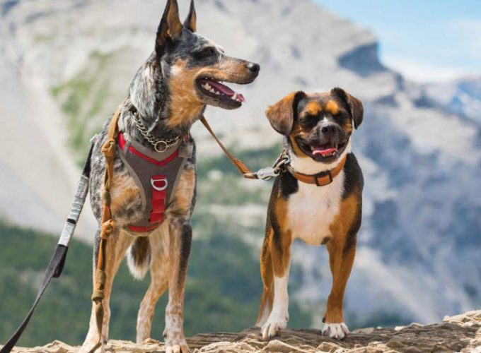 What to Know Before Going to the Mountains With Your Dog
