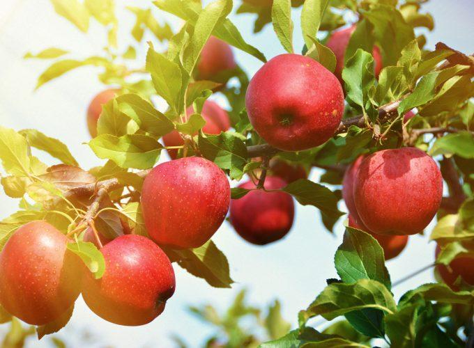 3 Steps to Start a Mini Backyard Orchard