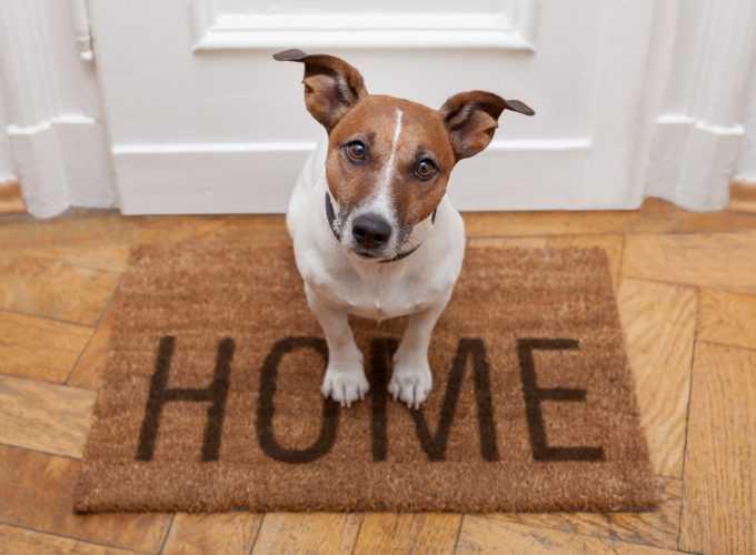 From Pet Owner to Homeowner: 8 Features for a Pet-Friendly Home