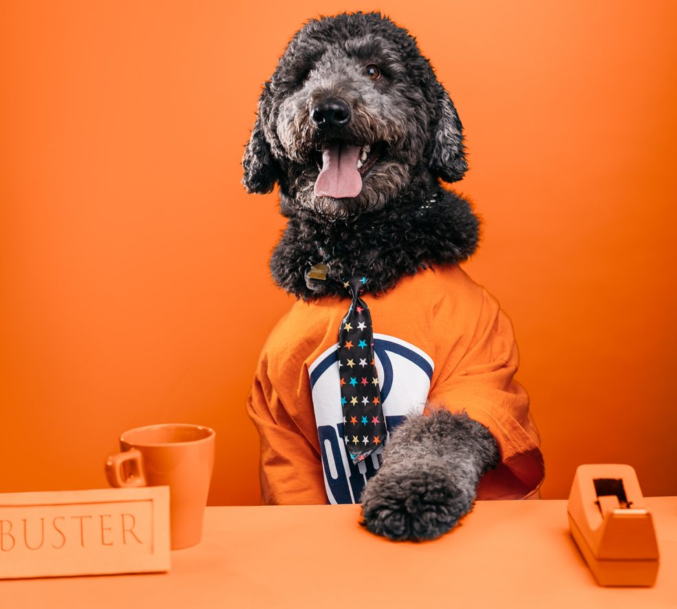 Meet the Dogs of Edmonton: Buster