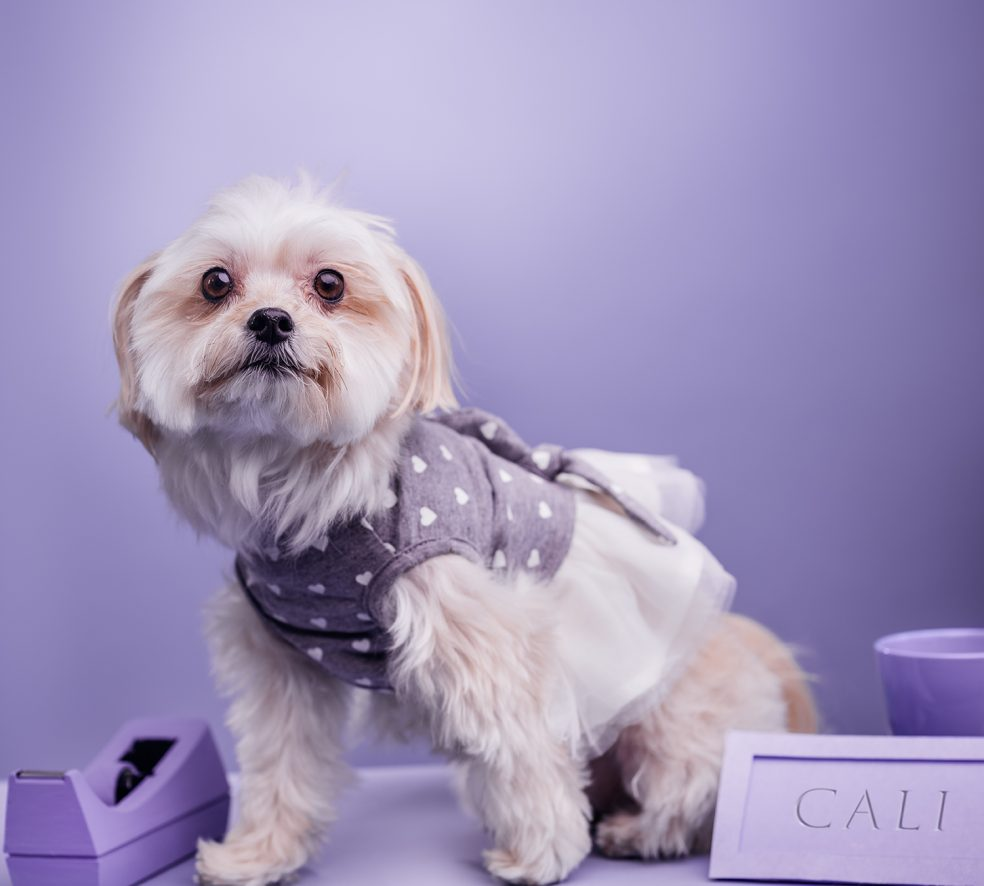 Meet the Dogs of Edmonton: Cali