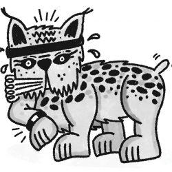 Wait, is that Lynx Wearing a Fitbit?