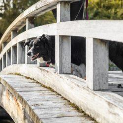 Dog-Day_0001-1024x682