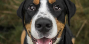 Dog-day-care-2-1