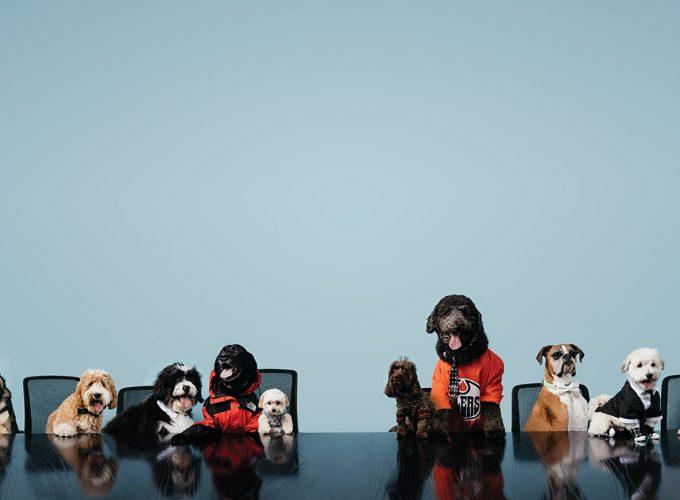 Meet the Dogs of Edmonton