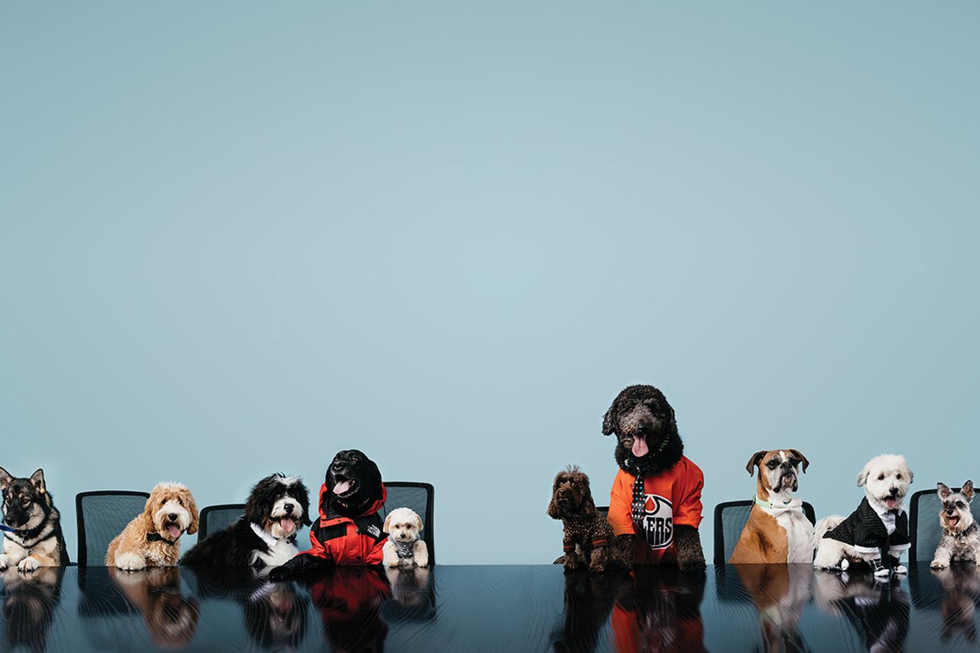 DogsCrop