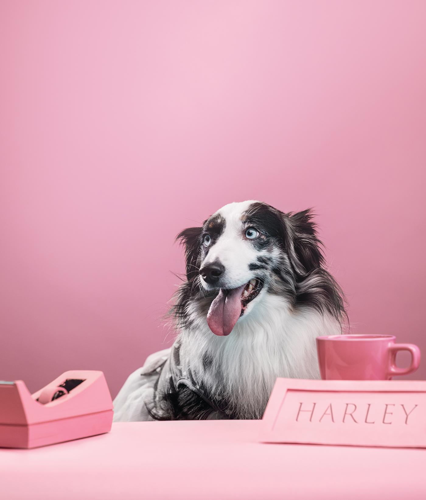 Dogs_Harley.jpg