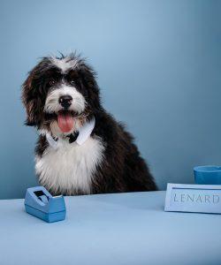 Lenard, Connor McDavid's Dog