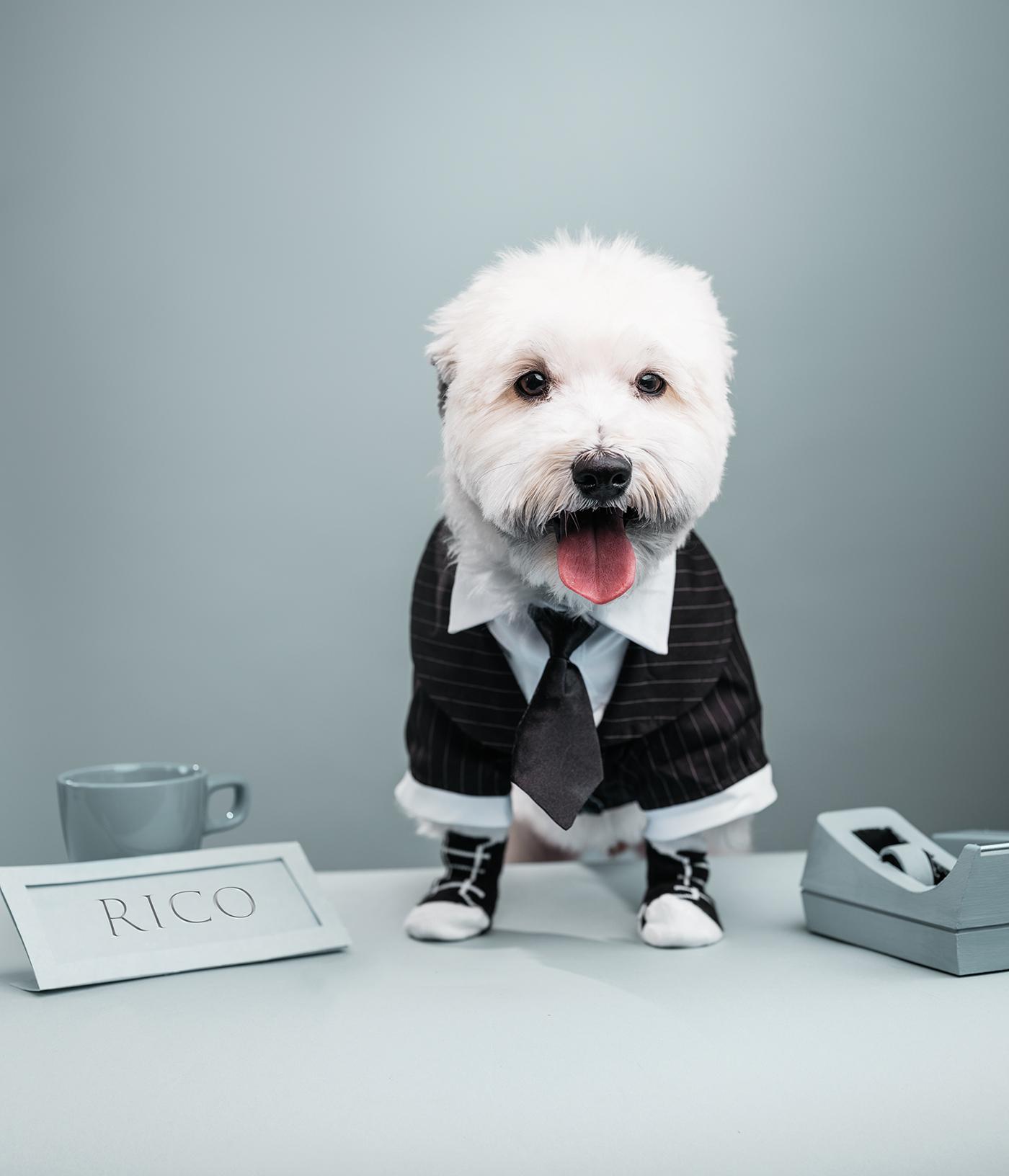 Dogs_Rico.jpg