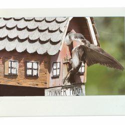 Ellis-Bird-Farm.jpg