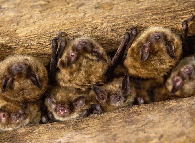 Bat-ter Up!