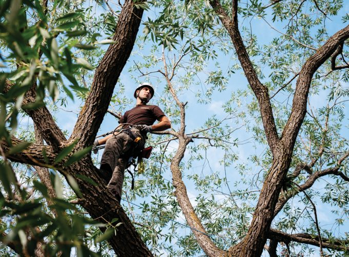 Expert: What I Know About … Tree Climbing