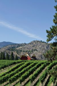 FOR-WEB_River-Stone-Estate-Winery.jpg
