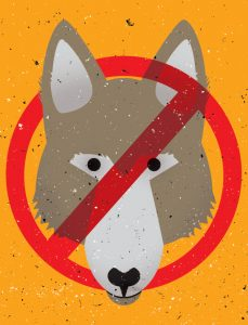 FOR-WEB_animals_coyote
