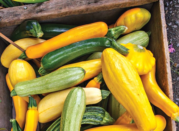 Ingredient: Summer Squash