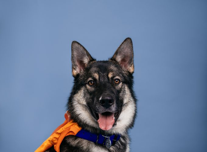 Meet the Dogs of Edmonton: Franklin