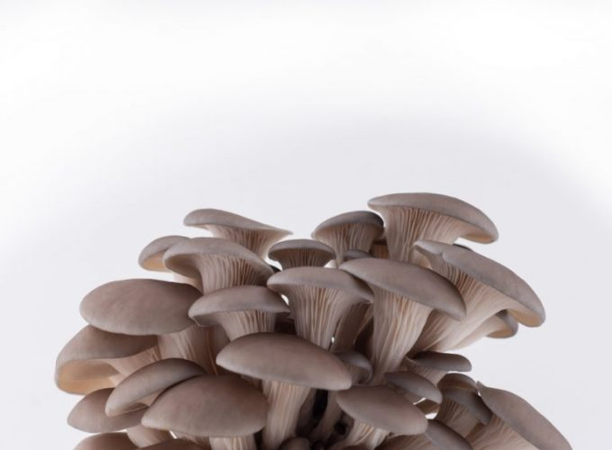 Taste Mushrooms Again, for the First Time