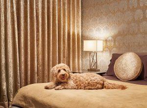 House3_Bedroom_DogOnBed
