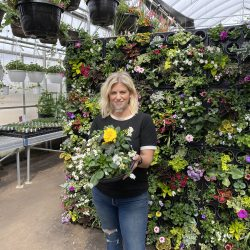 living wall, planter, hanging baskets, greenhouse
