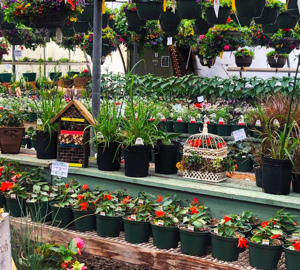 Green Thumbs Up! Edify's 2021 Greenhouse Guide