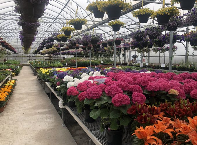 6 of Ed's Favourite Greenhouses in and Around Edmonton