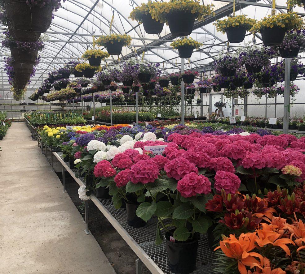 6 of Ed's Favourite Greenhouses in and Around Edmonton