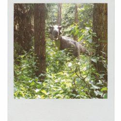 Jurassic-Forest.jpg