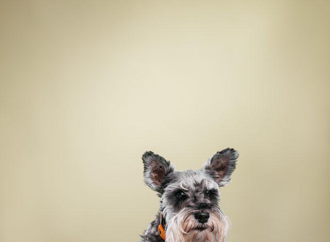 Meet the Dogs of Edmonton: Marley