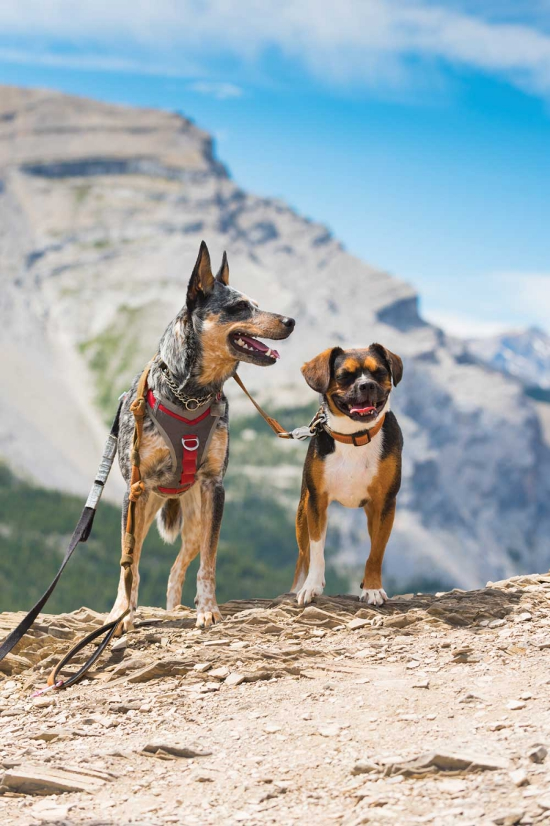 Mountains-Dogs1-2.jpg