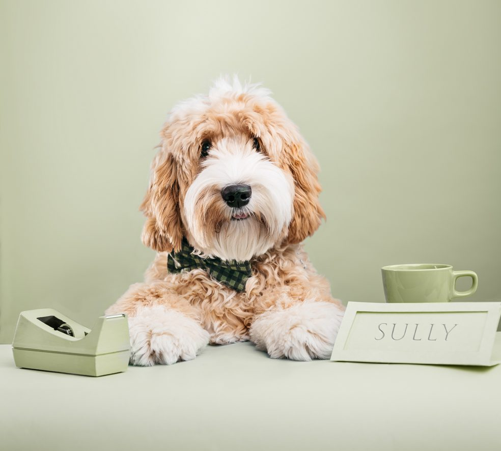 Meet the Dogs of Edmonton: Sully