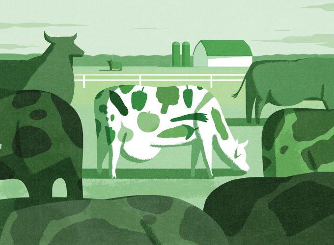 #YEG: A Vegetarian Walks Onto a Cattle Farm…