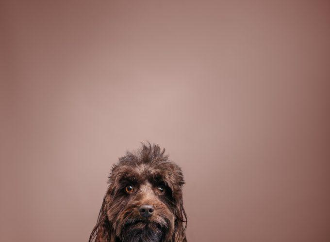 Meet the Dogs of Edmonton: Ziggy