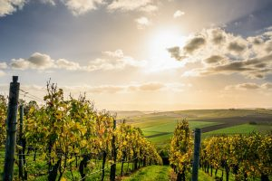 agriculture-clouds-countryside-1277181
