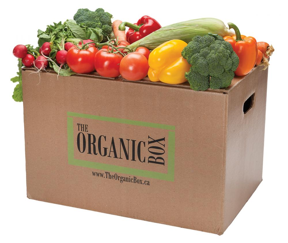 for-web_cool-hunters6-theorganic-box