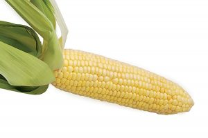 for_web_corn-7946-95732416