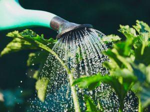 kiwi-nurseries-container-gardening-copy