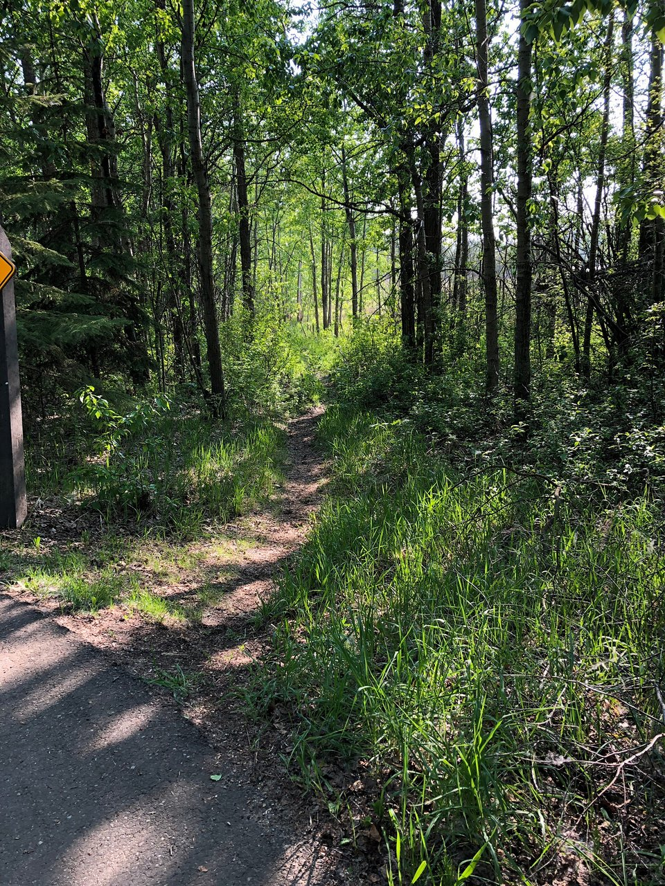 Red Willow Trail System, trees, forest, gravel trail