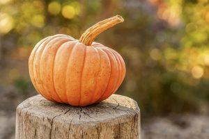 pumpkin-ge524067d4_1920