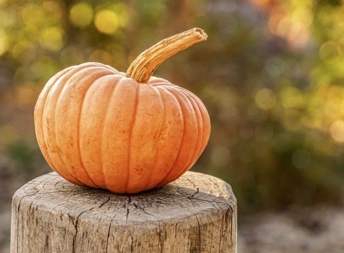The Great Pumpkin Scavenger Hunt