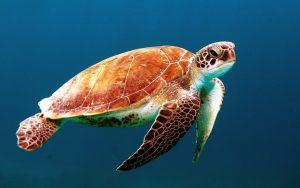 turtle-863336_1280 (1)